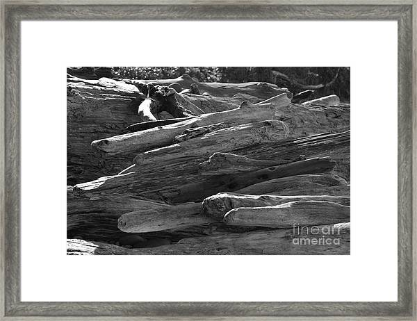 Drifted Wood Framed Print