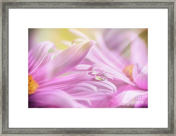 Drop In The Morning 3 Framed Print