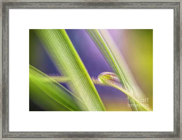 Drop In The Morning Framed Print