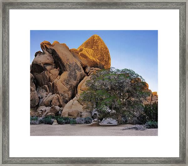 Dry Wash Oak Tree Framed Print