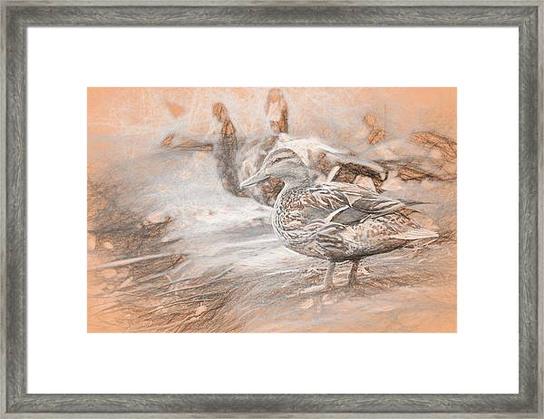 Ducks On Shore Da Vinci Framed Print