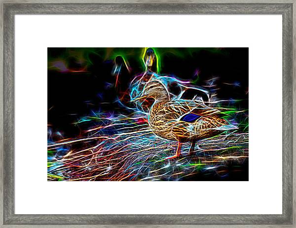 Ducks On Shore Wizard Framed Print