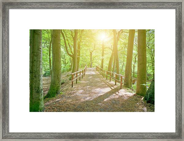 Dutch Forest With Fenced Footpath And Framed Print