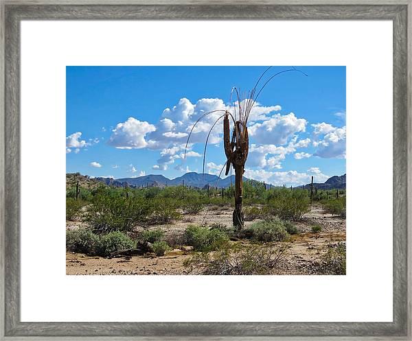 Dying Saguaro In The Desert Framed Print
