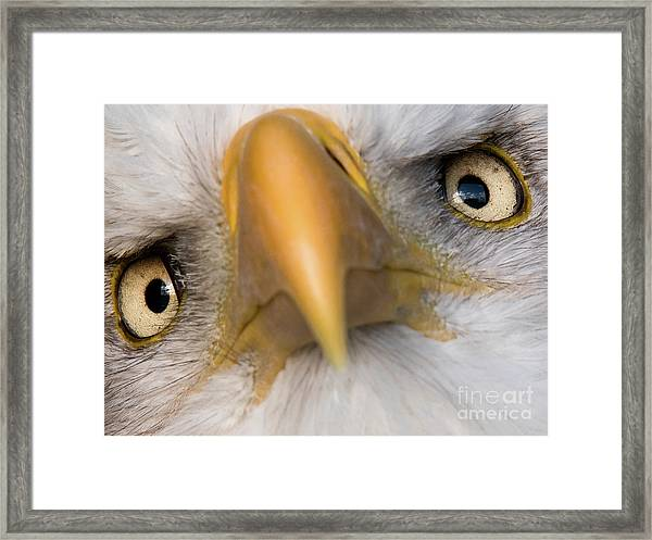 Eagle Eyes Framed Print