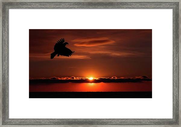 Eagle In A Red Sky Framed Print