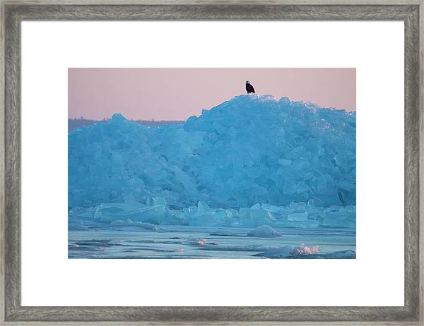 Eagle On Ice Mackinaw City 2261803 Framed Print