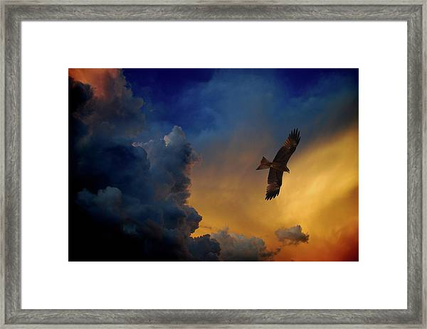 Eagle Over The Top Framed Print by Gopan G Nair