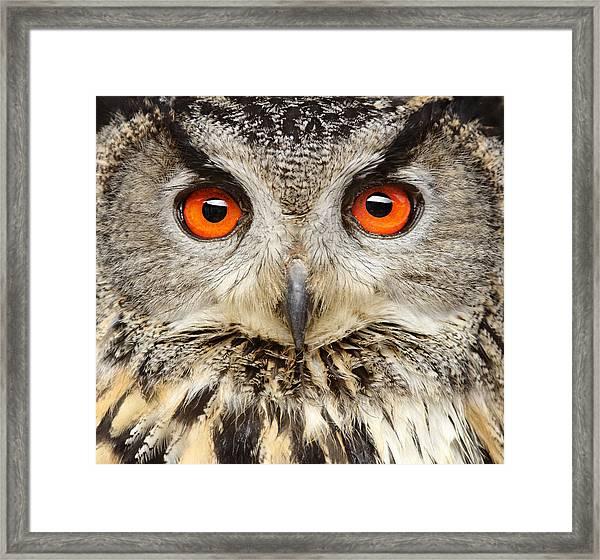 Eagle Owl Close Up Framed Print