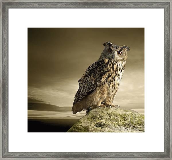 Eagle Owl Standing Full Length On A Rock Framed Print