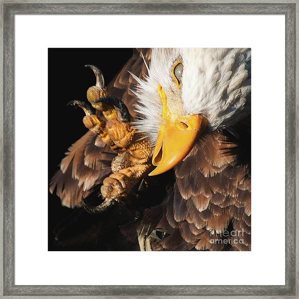 Eagle Scratch Framed Print