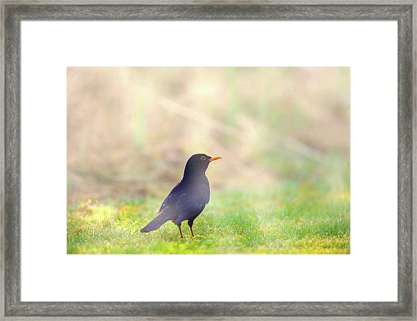 Early Bird Framed Print