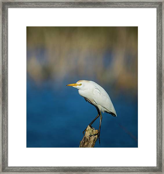 Egret On A Stick Framed Print