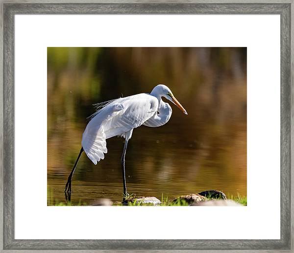 Egret Yoga Framed Print
