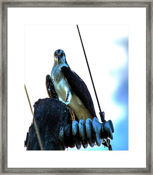 Electrifying Pose  Framed Print