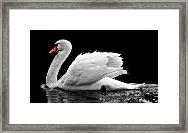 Elegant Swan Framed Print