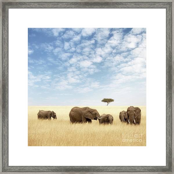 Elephant Group In The Grassland Of The Masai Mara Framed Print