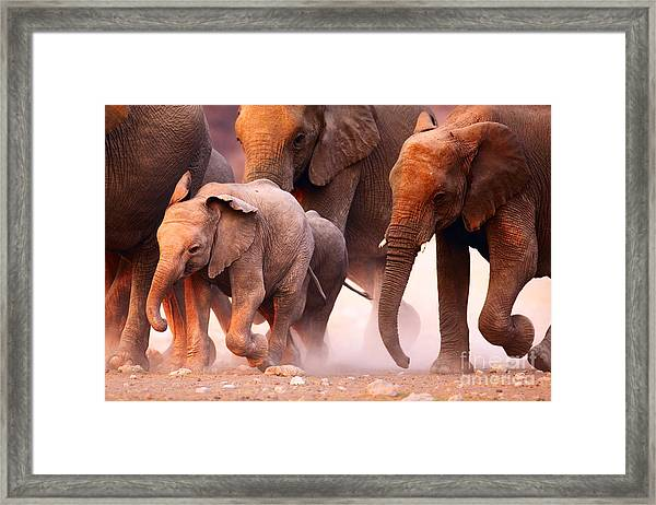 Elephant Herd On The Run In Etosha Framed Print