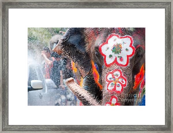 Elephant Splashing Water During Framed Print