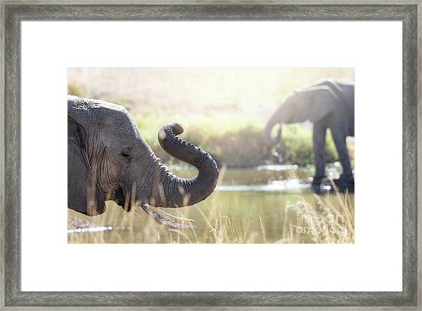 Elephants At A Watering Hole Framed Print