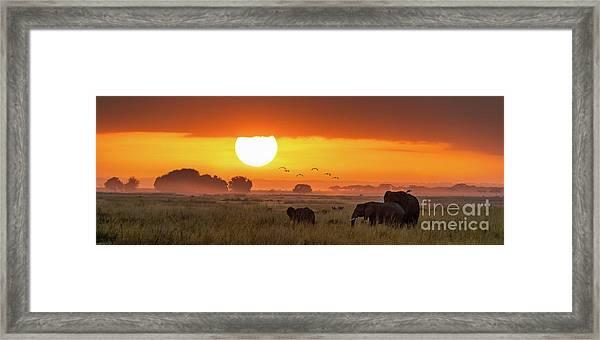 Elephants At Sunrise In Amboseli, Horizonal Banner Framed Print