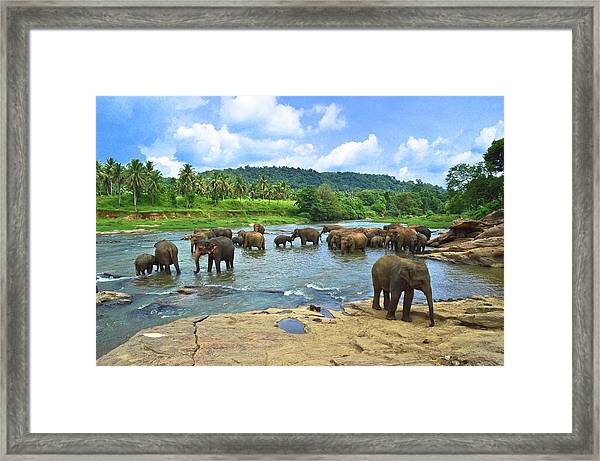 Elephants Bathing In River Framed Print