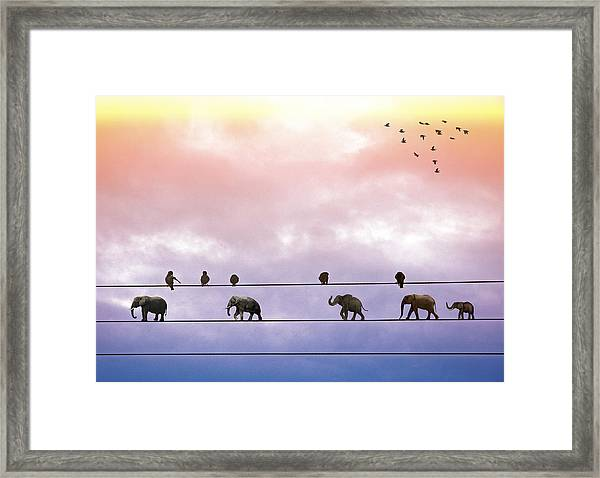 Elephants On The Wires Framed Print