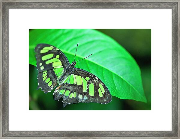 Emerald Framed Print by By Ken Ilio