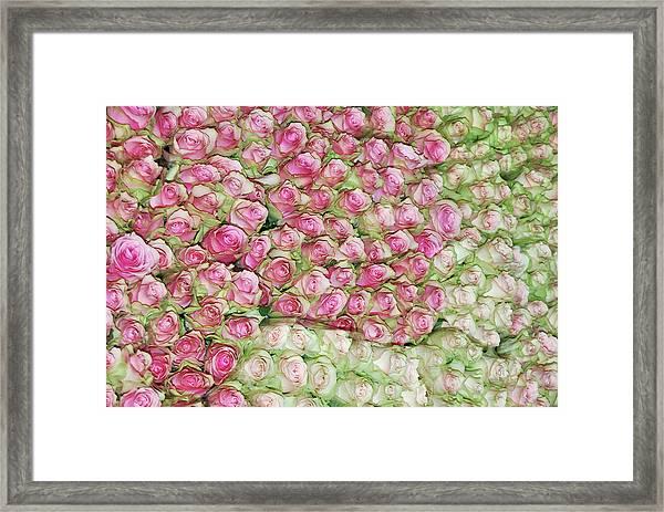 Empress Josephine's Roses Framed Print