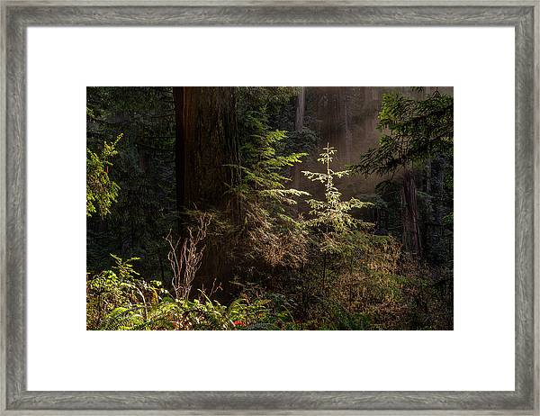Enchanted Daybreak Framed Print