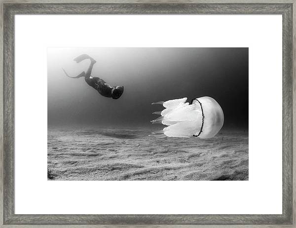 Encounters II Framed Print