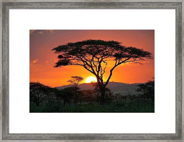 End Of A Safari-day In The Serengeti Framed Print by Guenterguni