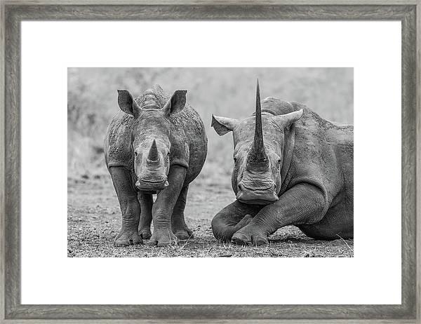 Endangered Duo Framed Print