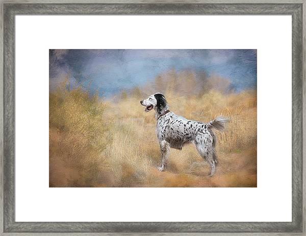 English Setter Dog Framed Print