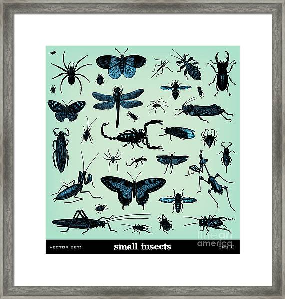 Engraving Vintage Insect Set From Framed Print
