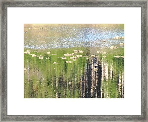 Estero Trail_3084_11 Framed Print