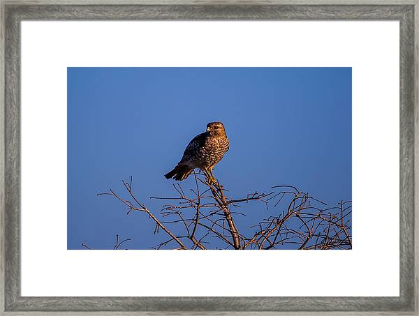 Evening Look Out Framed Print