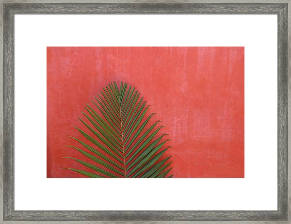 Exotic Background Framed Print