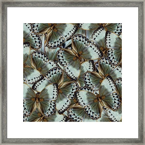 Exotic Grey And Pale Green Background Framed Print