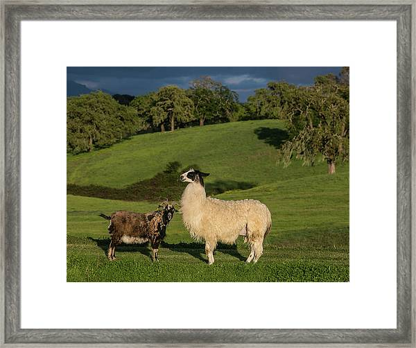 Exploring Sonoma Countys Wine Country Framed Print by George Rose