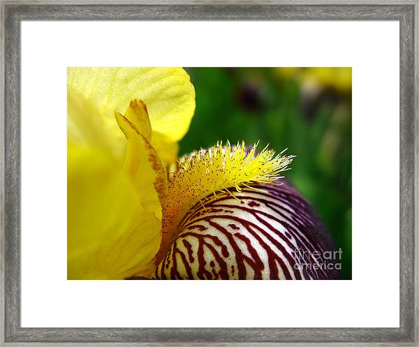 Extreme Close Up Of Yellow And Vinous Framed Print