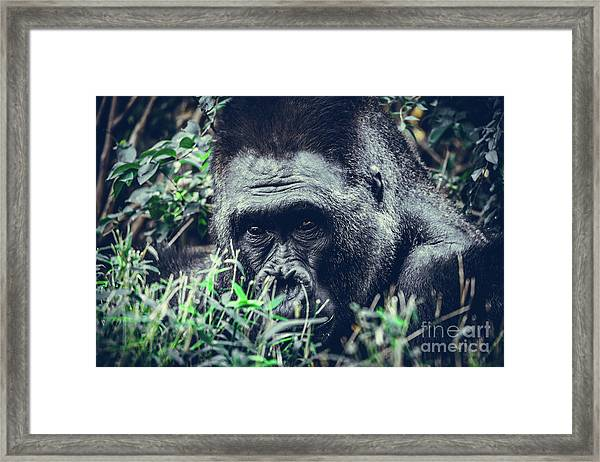 Eyes Speak Framed Print