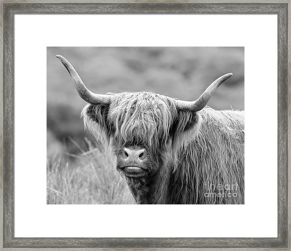 Face-to-face With A Highland Cow - Monochrome Framed Print