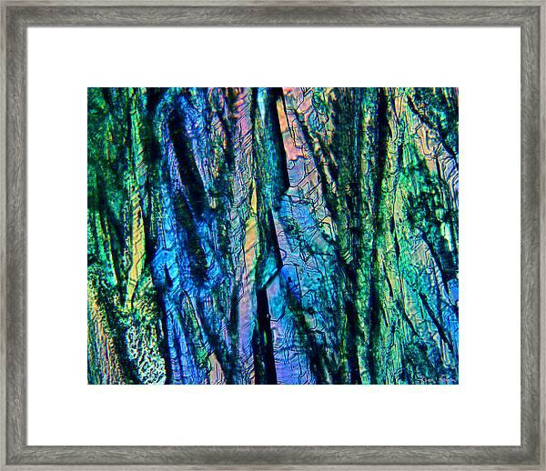 Fading Splendor Framed Print