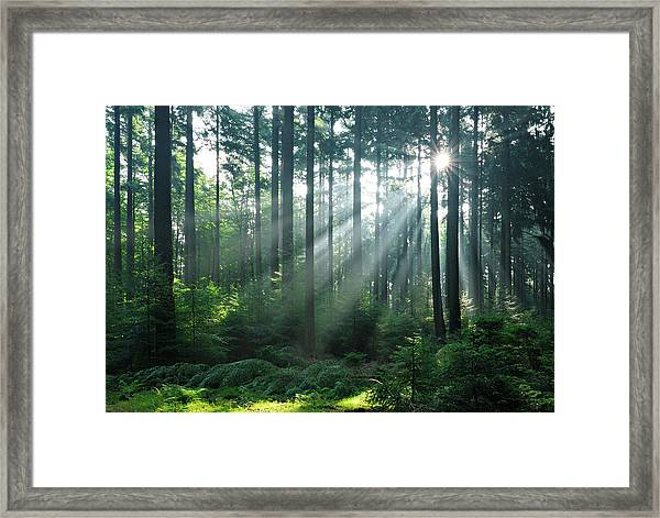 Fairytale Forest - Sunbeams In Natural Framed Print by Avtg