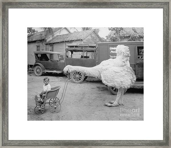 Fake Ostrich Pushing Boy In Stroller Framed Print