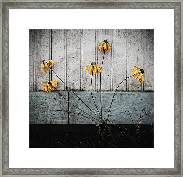Framed Print featuring the photograph Fake Wilted Flowers by Steve Stanger