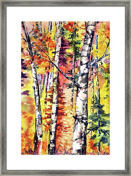 Fall Aspen Colors Framed Print