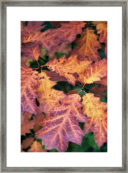 Framed Print featuring the photograph Fall Flames by Whitney Goodey