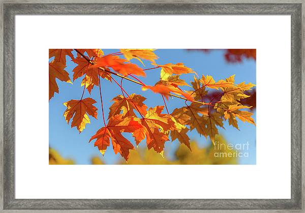 Fall Foliage Framed Print